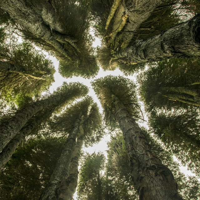 """""""the canopy"""" stock image"""