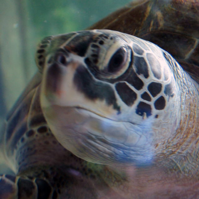"""Grumpy Turtle"" stock image"