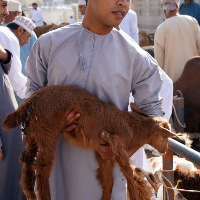 """""""Nizwa Goat market"""" stock image"""