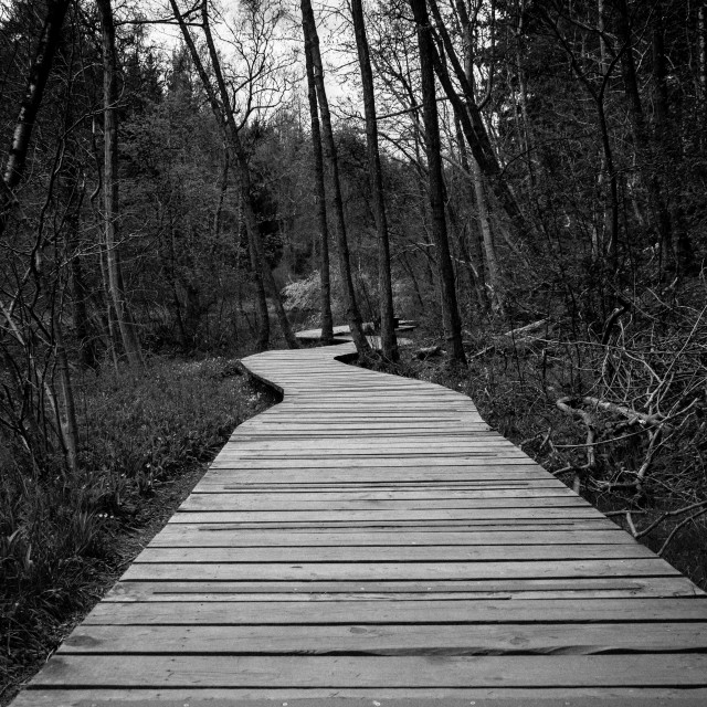 """Woodland boardwalk"" stock image"