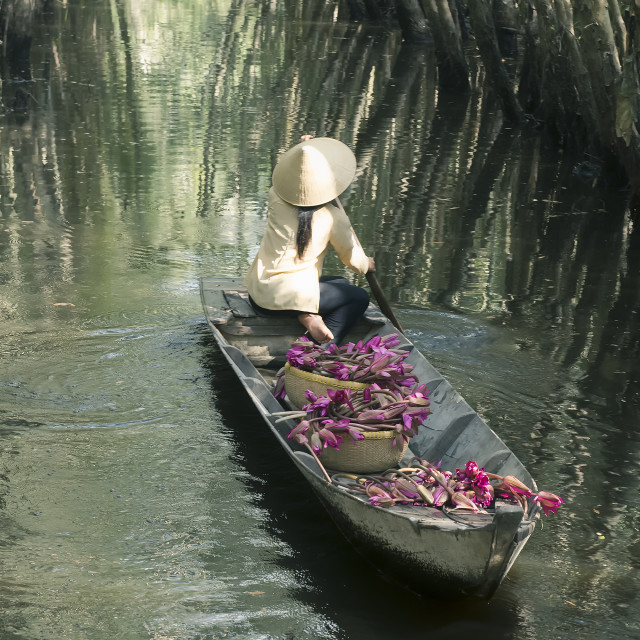 """Vietnamese woman rowing boat loaded with waterlily flowers"" stock image"