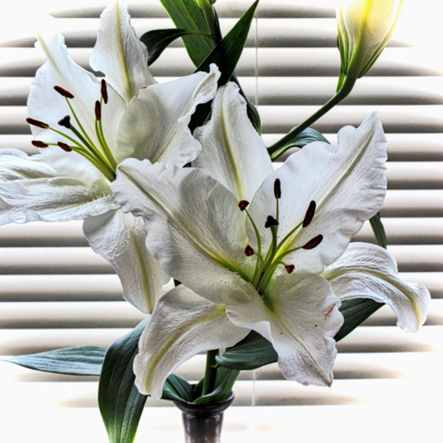 """lilies"" stock image"