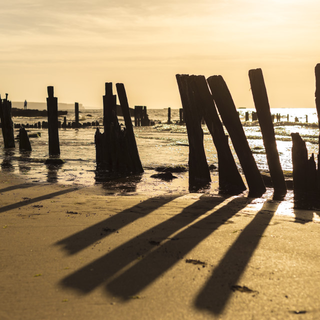 """Lone Figure Amongst Timber Beach Posts in Setting Sun"" stock image"