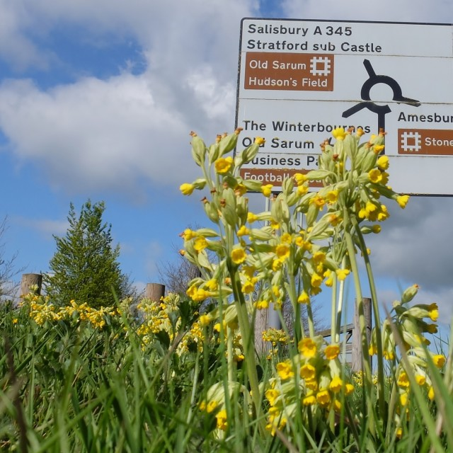 """Cowslip Roundabout."" stock image"