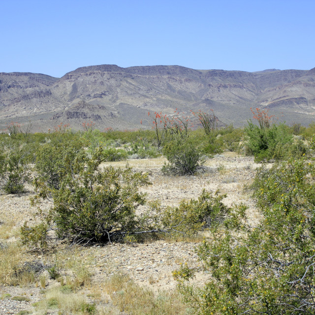 """Colorfull Landscape, Mojave Style!"" stock image"