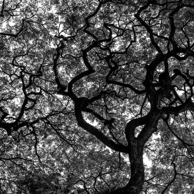"""Dark Branches"" stock image"