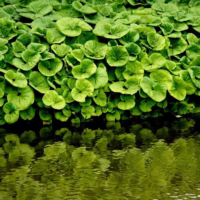 """Sandringham greenery"" stock image"