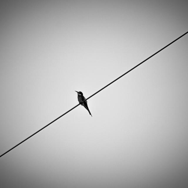 """""""Lonely bird"""" stock image"""