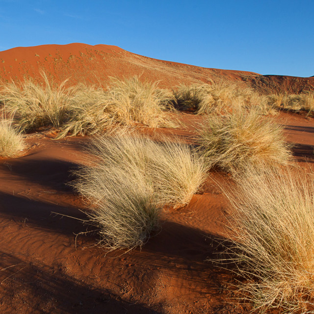 """Grass and dunes"" stock image"