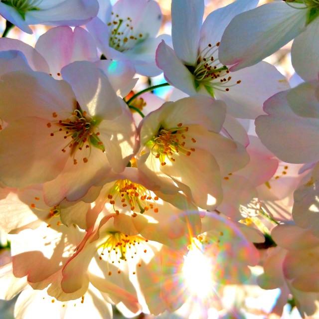 """Spring 2015- Pic12"" stock image"
