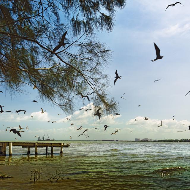 """""""Gathering birds"""" stock image"""