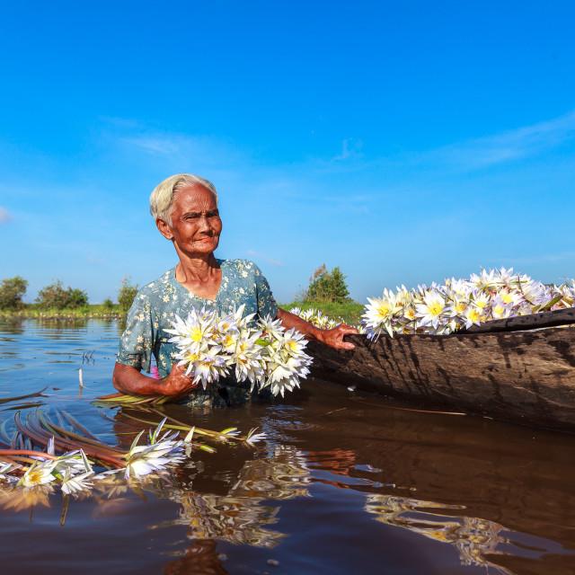 """""""Vietnam Living - Lotus gather women"""" stock image"""