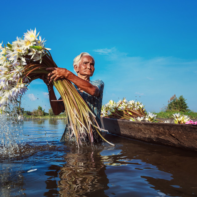"""Vietnam Living - Lotus gather women"" stock image"