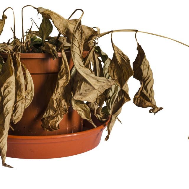 """Dead Plant"" stock image"