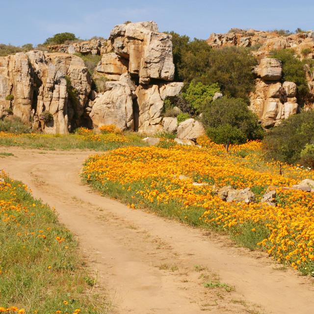 """""""Namaqualand Flowers"""" stock image"""