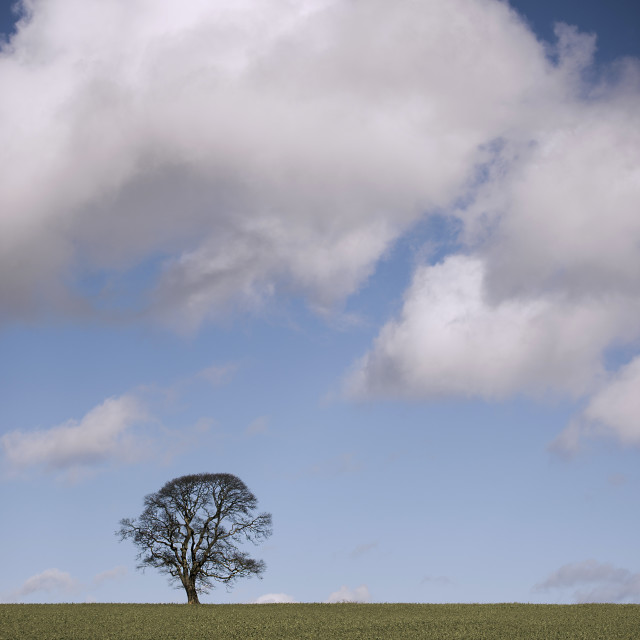 """Tree in Field with Clouds"" stock image"