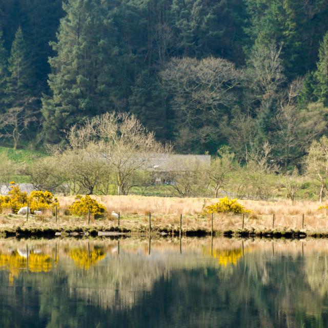 """""""Llyn Cwellyn Snowdonia"""" stock image"""
