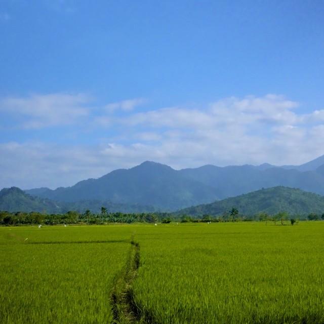 """""""Equilibrium rice"""" stock image"""