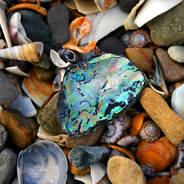 """Seashells collection"" stock image"