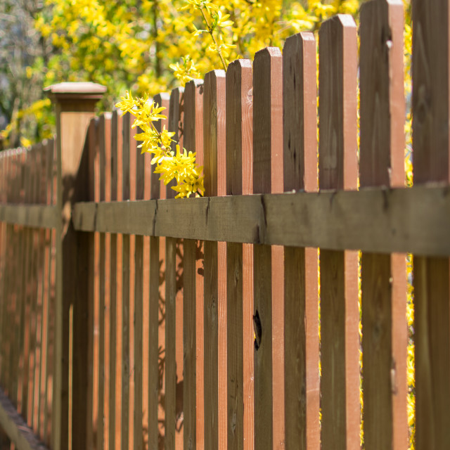 """Fence and Flowers"" stock image"
