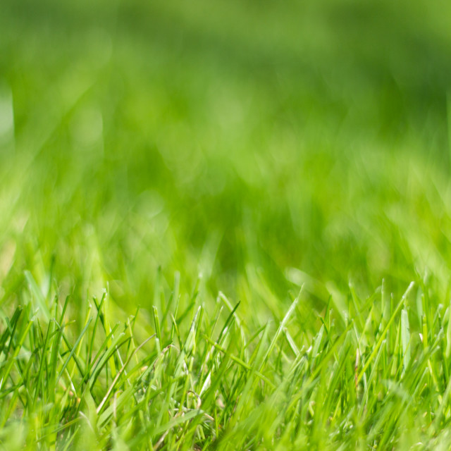 """Blurred background image of the grass and lawn"" stock image"