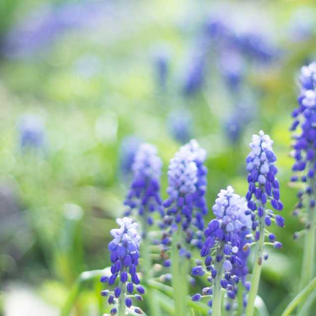 """""""Natural palette made by the blue flowers"""" stock image"""