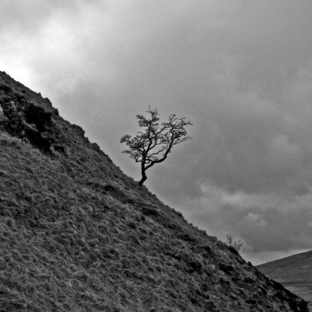 """Hill Tree"" stock image"