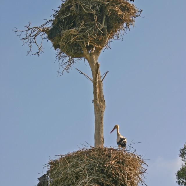 """""""Condominium of storks"""" stock image"""