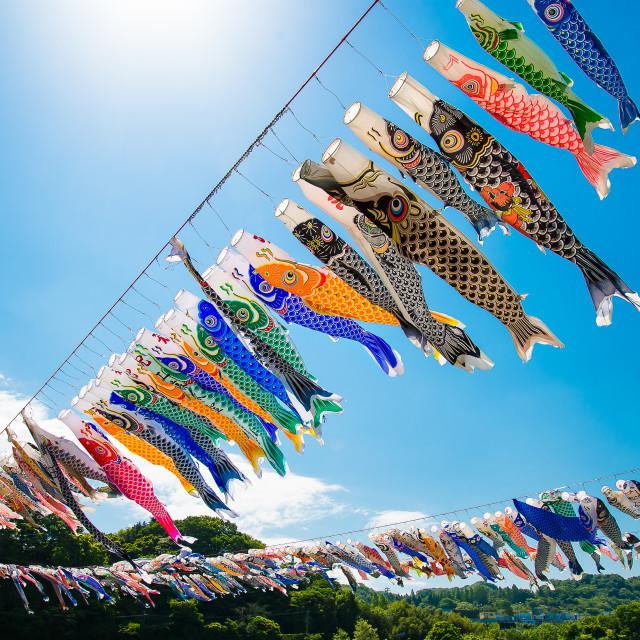 """Koinobori Festival 1"" stock image"