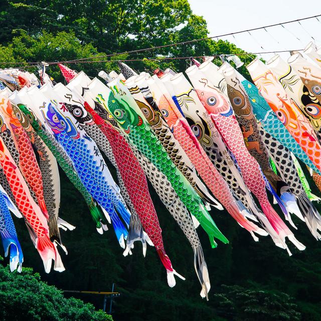 """Koinobori Festival 3"" stock image"