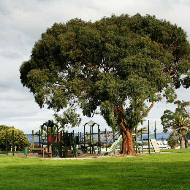 """atree and playground"" stock image"