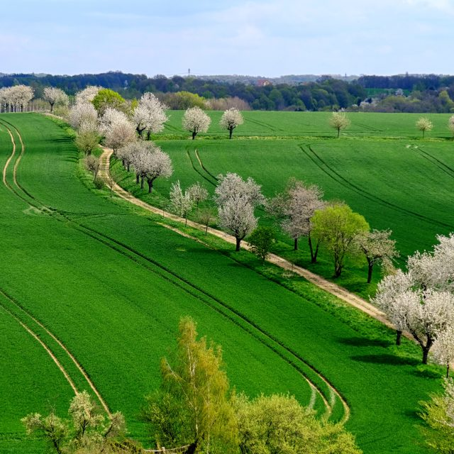 """Landscape in the Spring"" stock image"