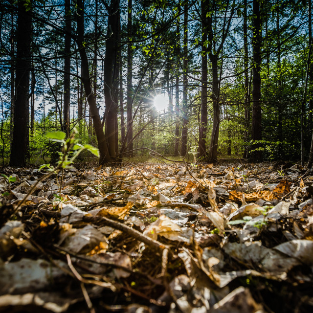 """""""Forest Floor"""" stock image"""