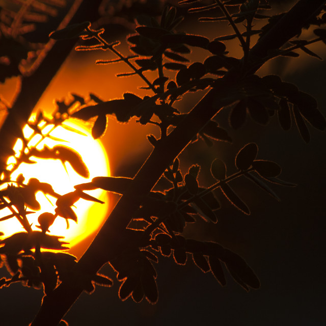 """Sunset in the Garden."" stock image"