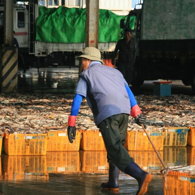 """Squid fisherman"" stock image"