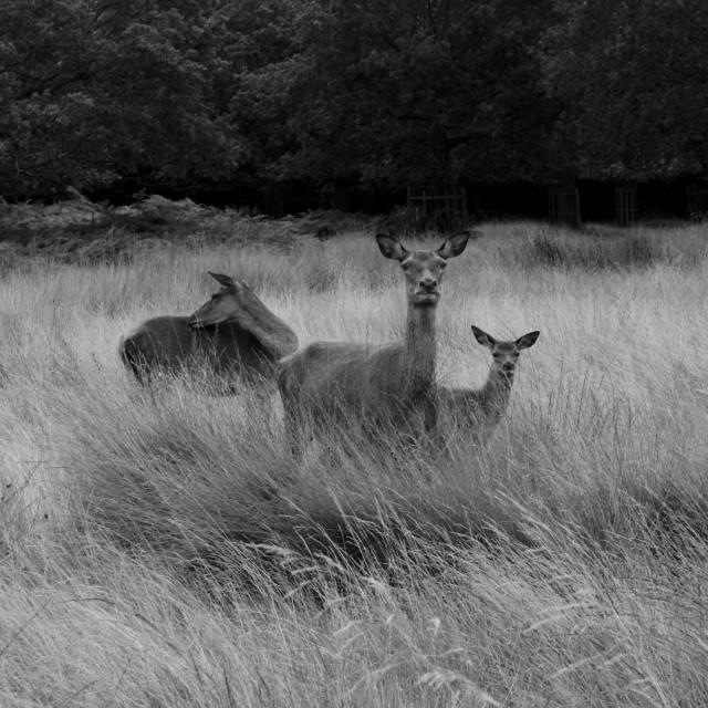 """Oh Deer"" stock image"
