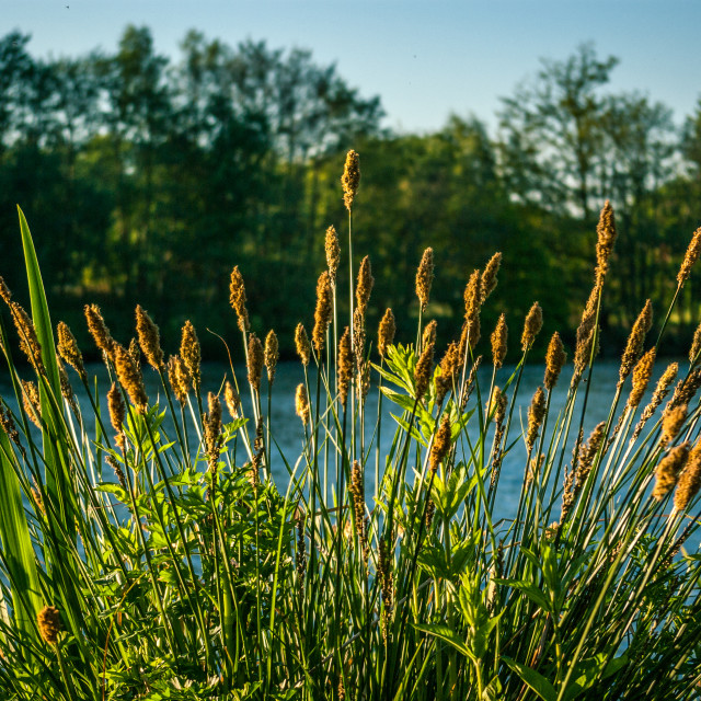 """Rushes"" stock image"