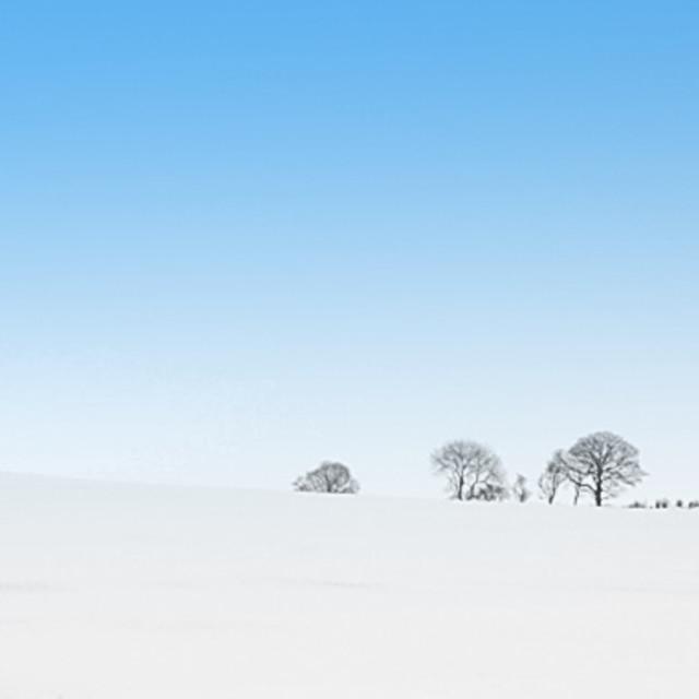 """sky vs tree"" stock image"