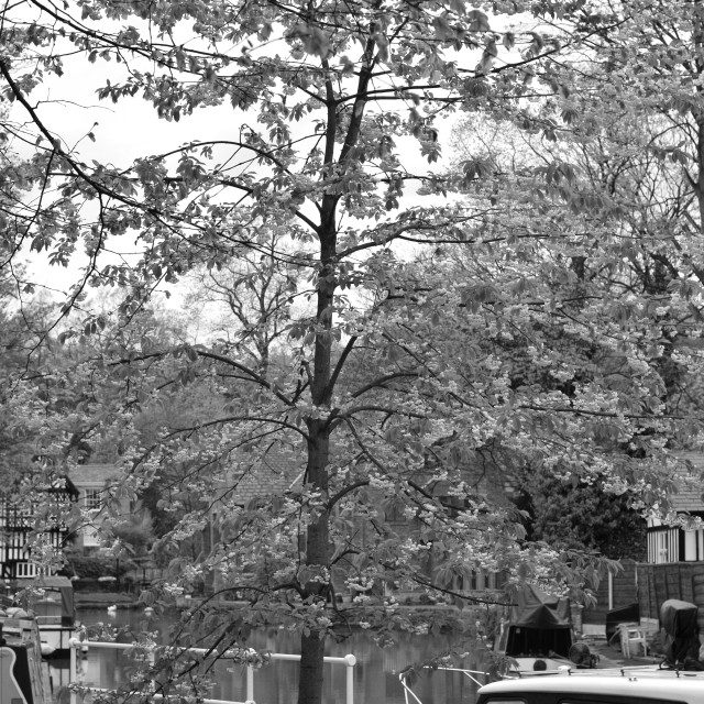 """Tree By The Canal"" stock image"