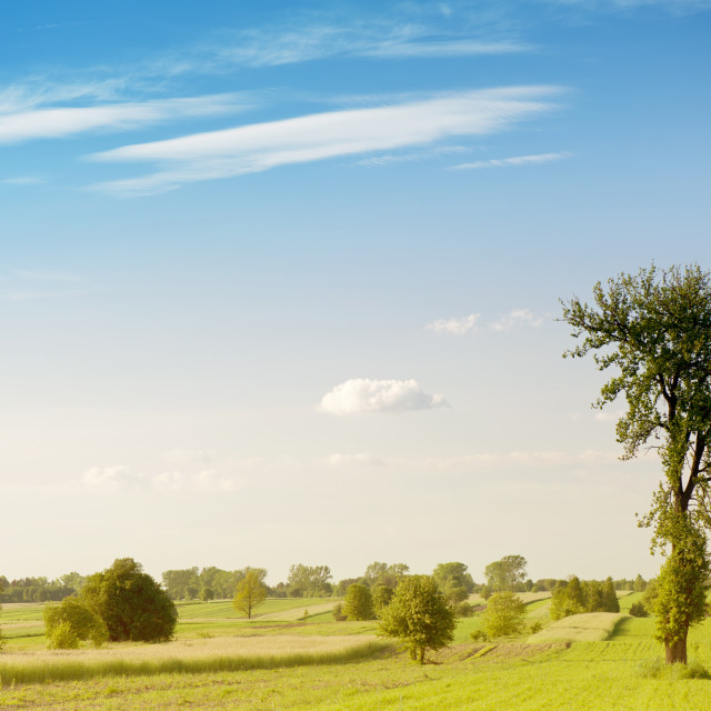 """""""Rural grassland trees view"""" stock image"""