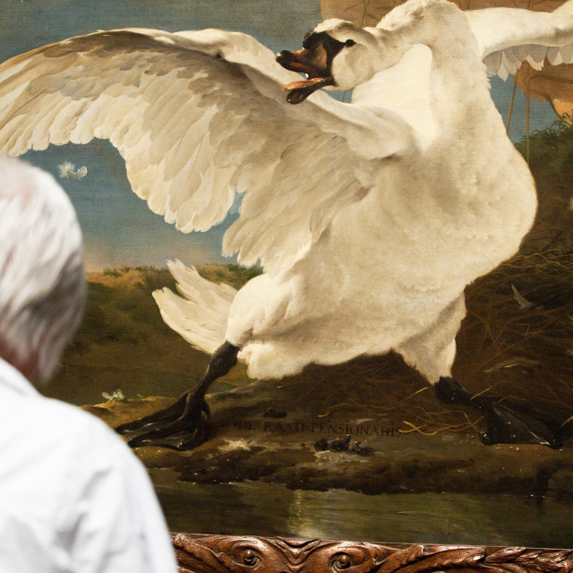 """Painting of swan"" stock image"