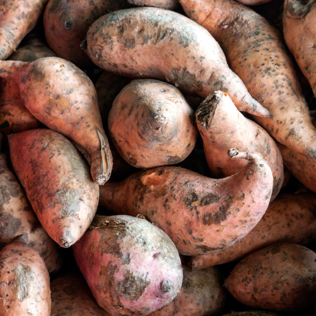 """Sweet potatoes fresh harvested"" stock image"