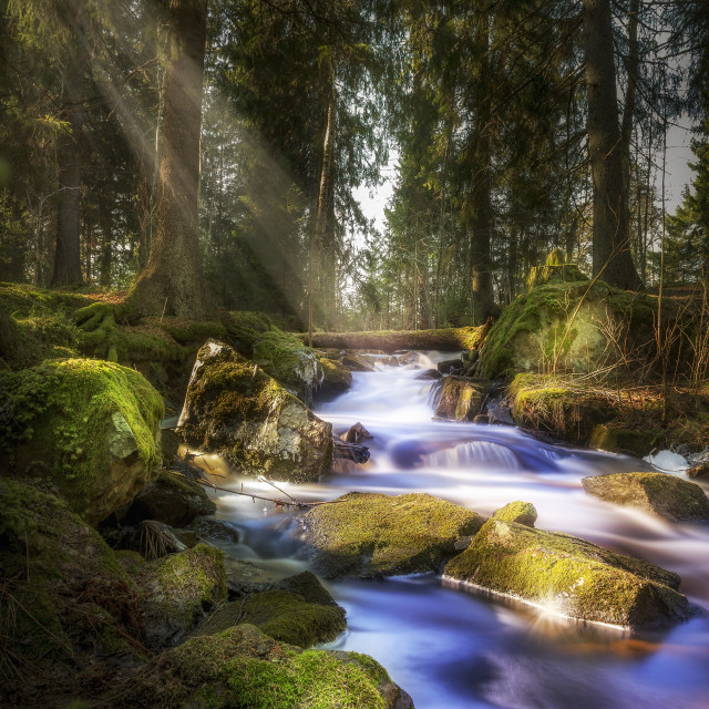 """Stream in the woods."" stock image"