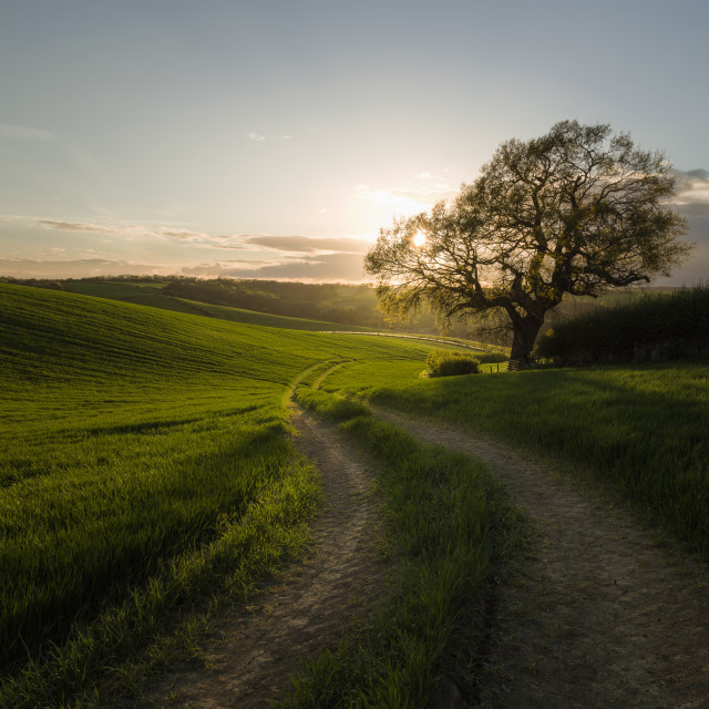 """Green fields at sunset - Terrington York"" stock image"