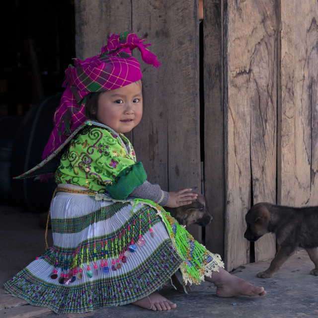 """Hmong Little Girl in traditional clothes with her dogs"" stock image"