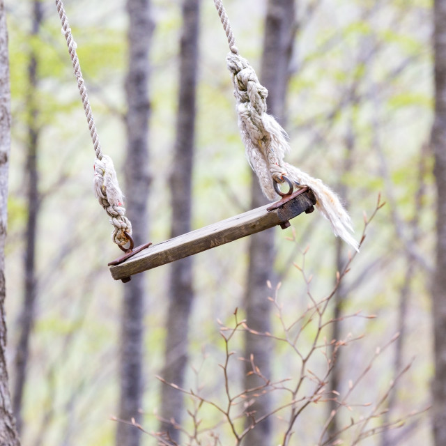 """""""old swing in the woods"""" stock image"""
