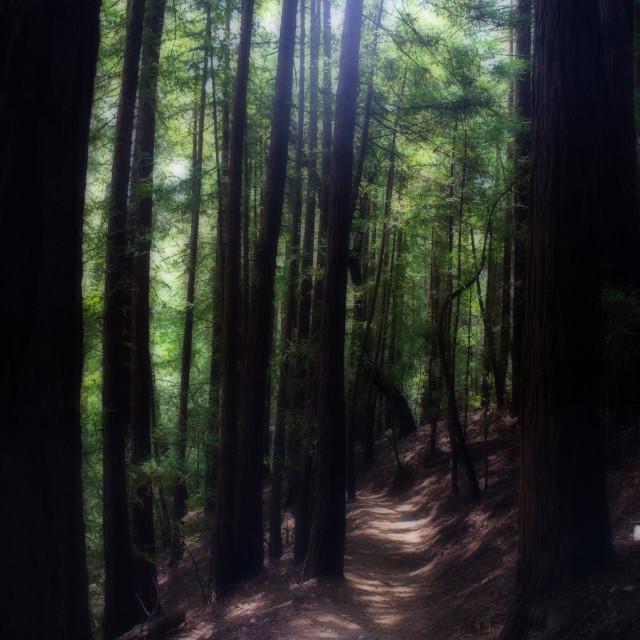 """Dreamy woods"" stock image"