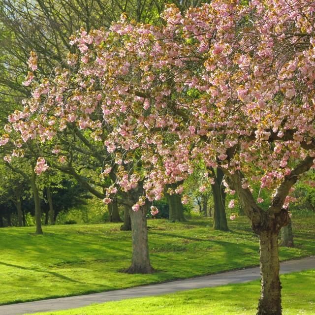 """""""Springtime."""" stock image"""