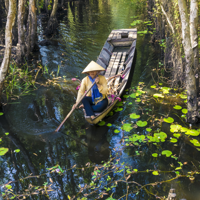 """Vietnamese woman rowing boat loaded with waterlily flower on the"" stock image"