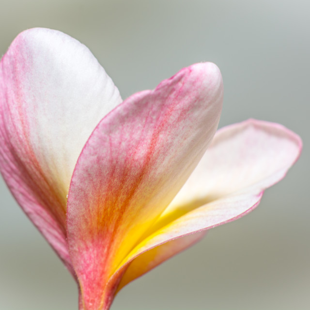 """Thaiflower"" stock image"